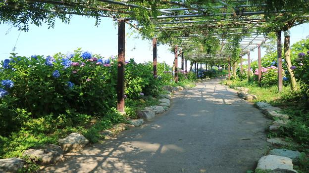 初夏の回廊