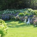 Photos: かざはやの里の紫陽花