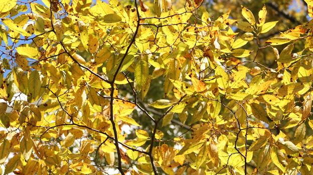 キラキラな秋