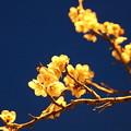 写真: 光の花