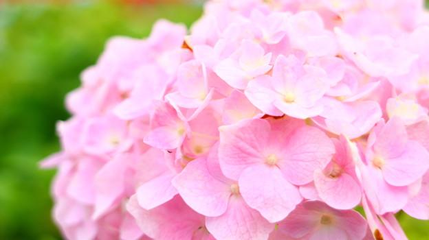 やさしさの花