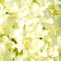 6月の花嫁へ