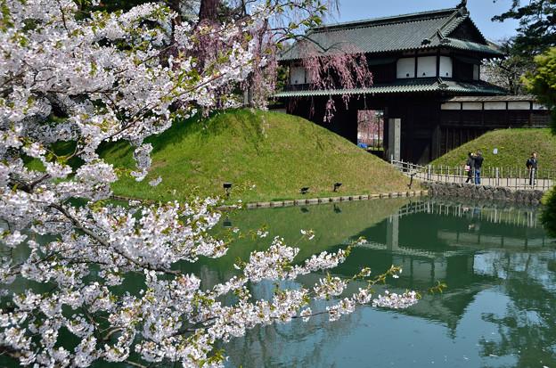 弘前公園・桜の頃 (11)