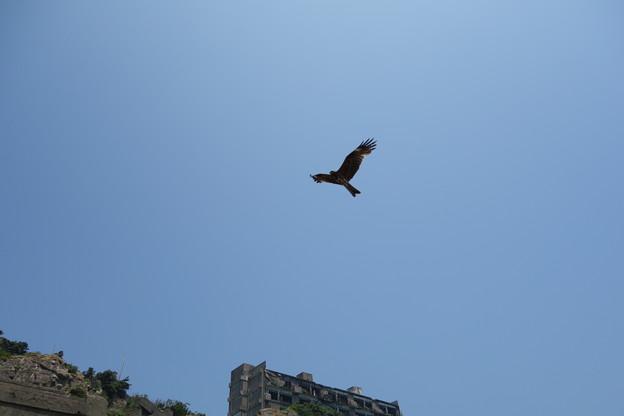 軍艦島の廃墟に舞う鳥