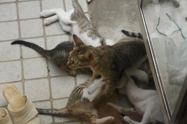 ぶら下がる子猫