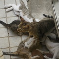 Photos: ぶら下がる子猫