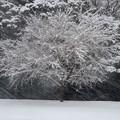 写真: 厳しい冬を乗り越えて
