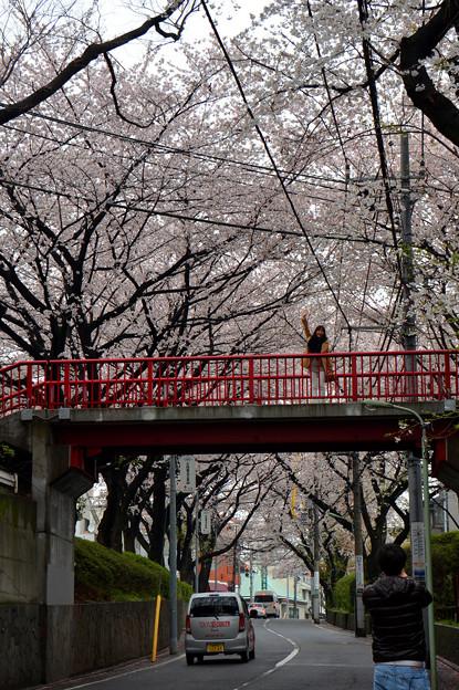 恋人たちの聖地「桜坂」