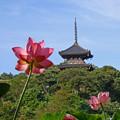 Photos: 蓮と塔