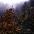 写真: 霧中の彩