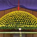 大作り花壇1