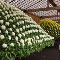 大作り花壇2