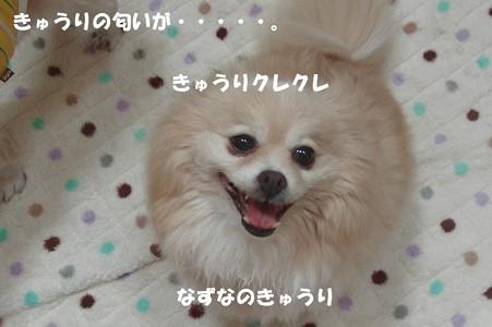 DSC_00571111