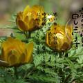 Photos: 寒中8
