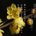 Photos: 寒中10