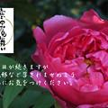 Photos: 寒中14