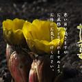Photos: 寒中15