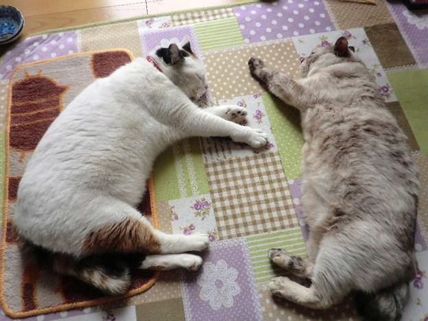 シロとムギ(2013年2月)