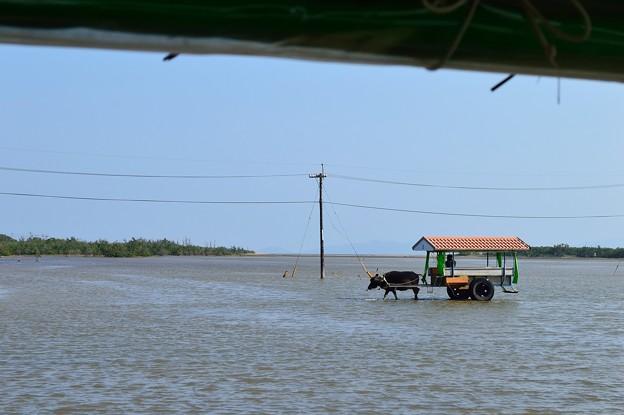 水牛車 由布島~西表島往復