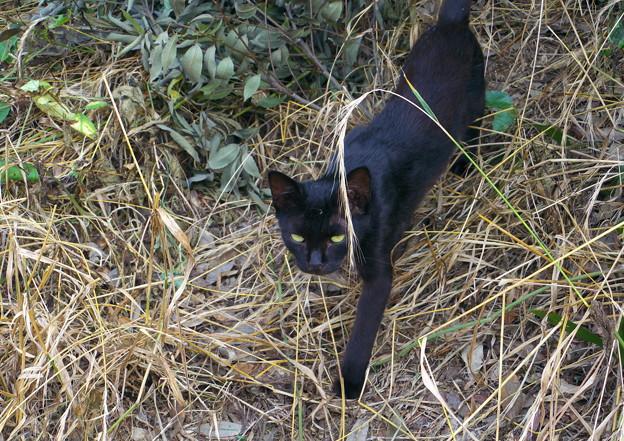 お屋敷の黒猫さん