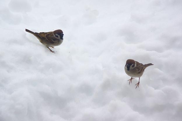 写真: 雪になると集まって来ます。