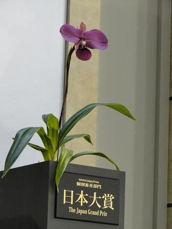 世界らん展日本大賞2013 日本大賞花 'セカンド スマイル'