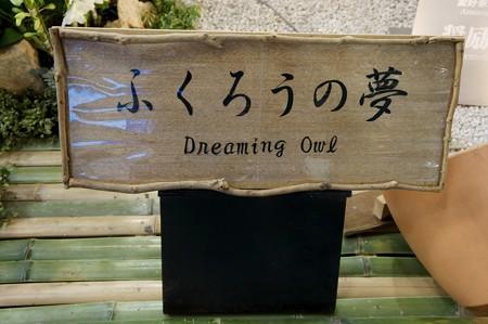 世界らん展日本大賞2013 ふくろうの夢