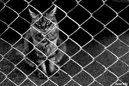 街猫110