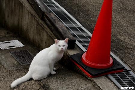 街猫113