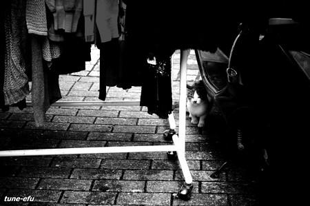 街猫118