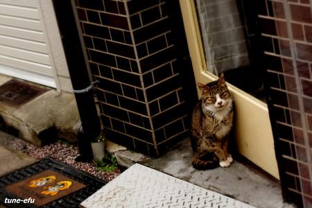 街猫120