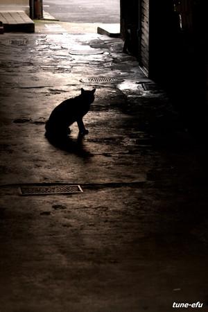 街猫132
