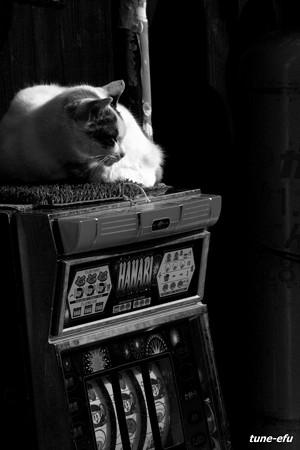 街猫134