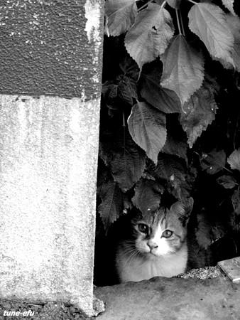 街猫136