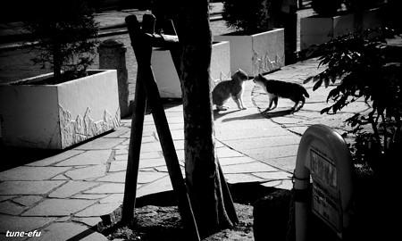 街猫158