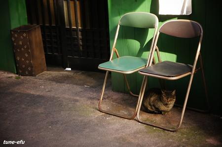 街猫159