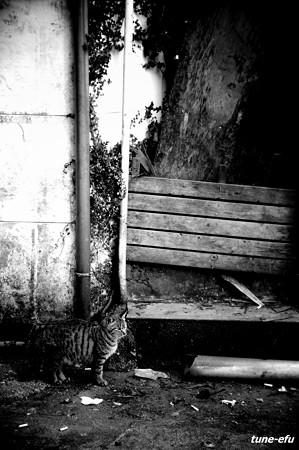 街猫163