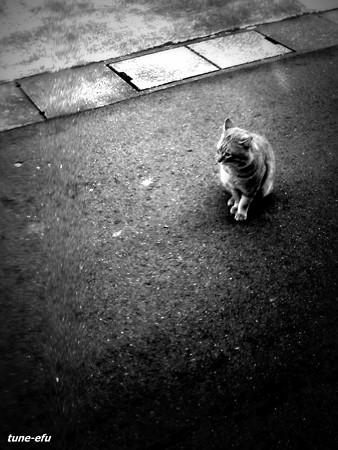街猫167