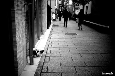 街猫168