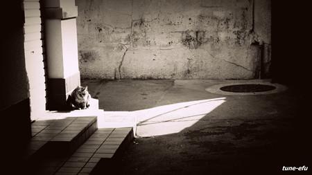 街猫172