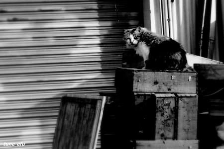 街猫176