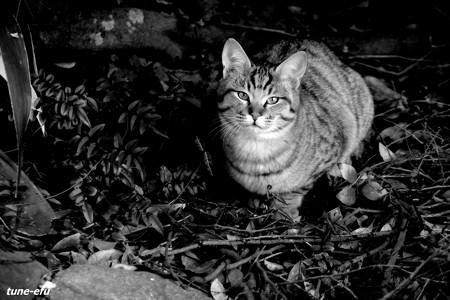 街猫179