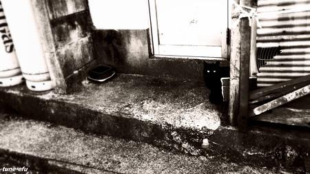 街猫181