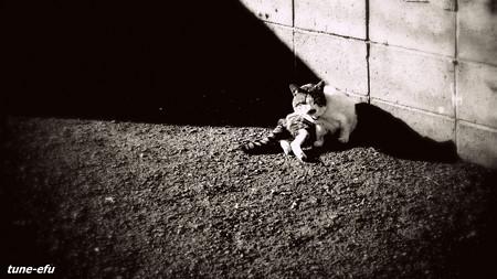 街猫187