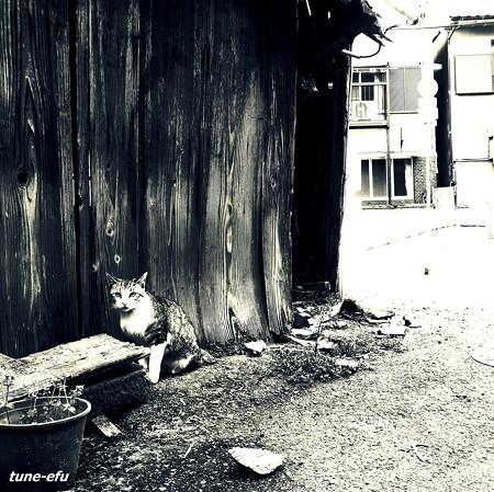 街猫204
