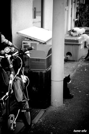 街猫214