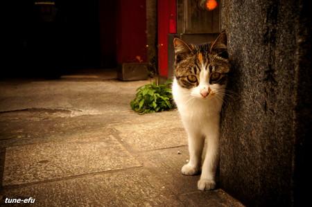 街猫215