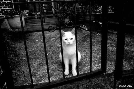 街猫233