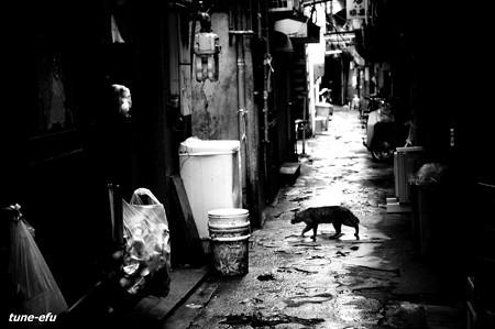 街猫240