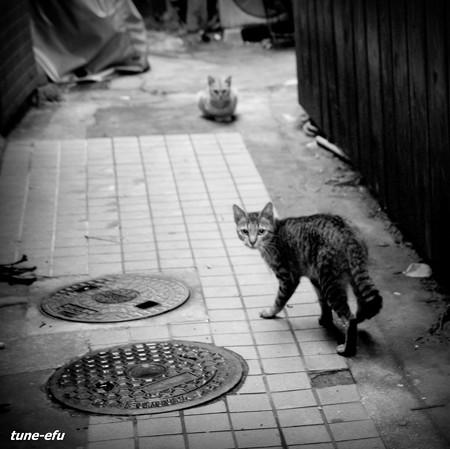 街猫251